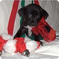 Adopt A Pet :: Dillon - Clayton, OH