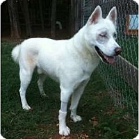 Adopt A Pet :: Steele - Okatie, SC
