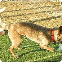 Adopt A Pet :: Taz (adoption pending) - Phoenix, AZ