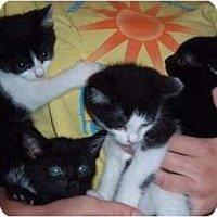 Adopt A Pet :: Jenkins, Midnite, Homer, Chen - Troy, OH