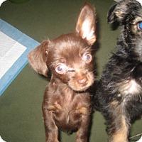 Adopt A Pet :: Pixie - Playa Del Rey, CA