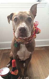 Pit Bull Terrier Mix Dog for adoption in Wilmington, Delaware - Princess