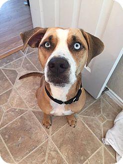 Catahoula Leopard Dog Mix Dog for adoption in Austin, Texas - Ezra