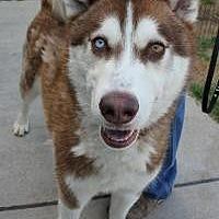 Adopt A Pet :: Mack - Yukon, OK