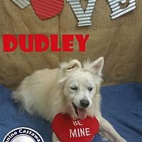 Adopt A Pet :: Dudley - Arcadia, FL