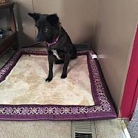 Adopt A Pet :: Nancy - Newport, MI