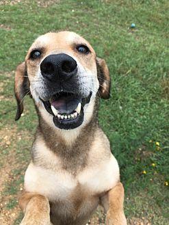 Hound (Unknown Type) Dog for adoption in Jackson, Mississippi - Roxy