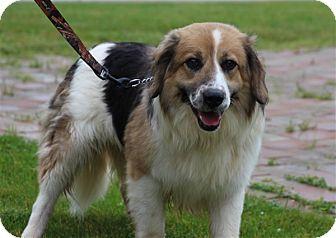 Collie Mix Dog for adoption in Elyria, Ohio - Mercury