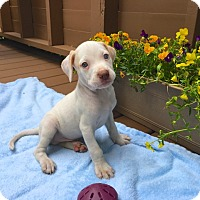 Adopt A Pet :: Tanner-available 6/28 - Sparta, NJ