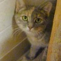 Adopt A Pet :: Bella - Westville, IN