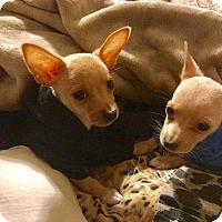 Adopt A Pet :: Dale - Livermore, CA