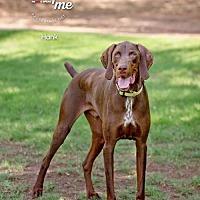 Adopt A Pet :: HANK - Chandler, AZ