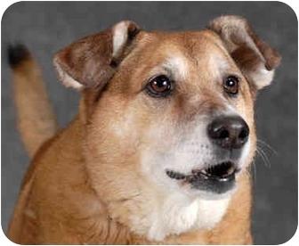 Shepherd (Unknown Type) Mix Dog for adoption in Chicago, Illinois - Myra