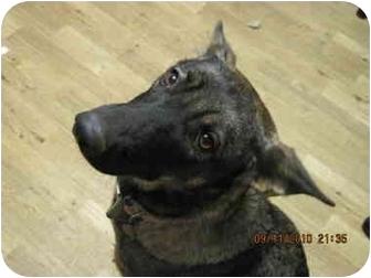 German Shepherd Dog Mix Dog for adoption in Bakersville, North Carolina - Sasha