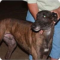 Adopt A Pet :: Rebel (Rebel Ridling) - Louisville, KY