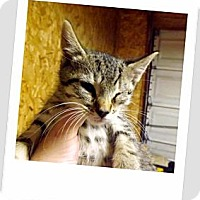 Adopt A Pet :: Bucky - Owosso, MI