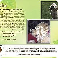 Adopt A Pet :: Mischa - Ottawa, ON