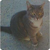 Adopt A Pet :: Pancake - Riverside, CA