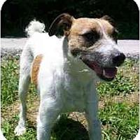 Adopt A Pet :: Andy/Maverick - Omaha, NE