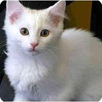 Adopt A Pet :: Candy Cane - Markham, ON