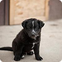 Adopt A Pet :: Joker - Saskatoon, SK
