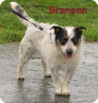 Jack Russell Terrier Mix Dog for adoption in Lewisburg, West Virginia - Branson