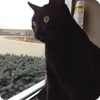Adopt A Pet :: Mystery - Byron Center, MI