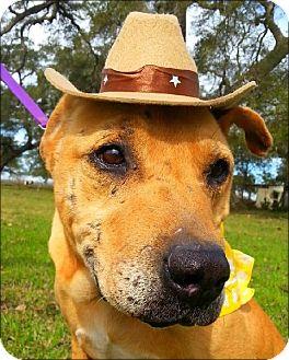 Labrador Retriever Mix Dog for adoption in Huntington, New York - Doggie - N