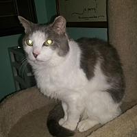 Adopt A Pet :: Aubrey - Cincinnati, OH