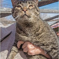 Adopt A Pet :: Wilson - Corinne, UT