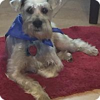 Adopt A Pet :: Tanner - Clarksville, TN