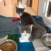 Adopt A Pet :: June - Ann Arbor, MI