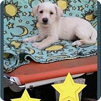 Adopt A Pet :: Geoffrey - Snyder, TX