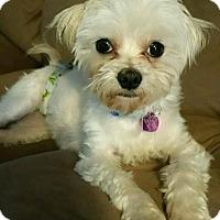 Adopt A Pet :: Mark - Covina, CA