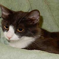 Adopt A Pet :: ROSALINE - Upland, CA