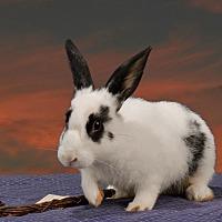 Adopt A Pet :: Kaylee - Marietta, GA