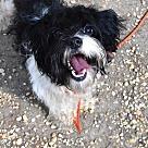 Adopt A Pet :: Arwen