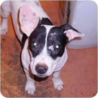 Bull Terrier Mix Dog for adoption in McDonough, Georgia - McKenzie