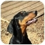 Photo 3 - Doberman Pinscher Dog for adoption in Greensboro, North Carolina - Cassie