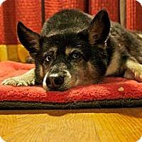 Adopt A Pet :: GiGi - Douglas, ON