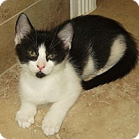 Adopt A Pet :: Jester - Delray Beach, FL