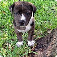 Adopt A Pet :: Magic - Harrah, OK