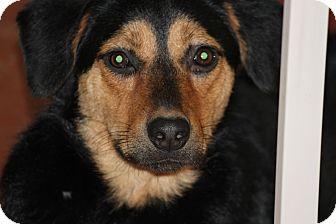 Shepherd (Unknown Type) Mix Dog for adoption in Las Vegas, Nevada - Aria