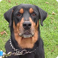 Adopt A Pet :: Tank - Alachua, GA