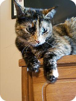 Domestic Shorthair Cat for adoption in Homewood, Alabama - Tallulah