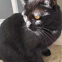 Adopt A Pet :: Pookie - Orange, CA
