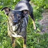 Adopt A Pet :: Audi - Salt Lake City, UT