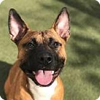 Adopt A Pet :: A395178 at San Francisco Shelt - Beverly Hills, CA