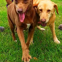 Adopt A Pet :: Hortense & Margo BONDED PAIR - Simsbury, CT