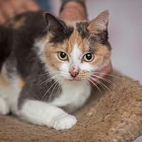 Adopt A Pet :: Calypso - Statesville, NC